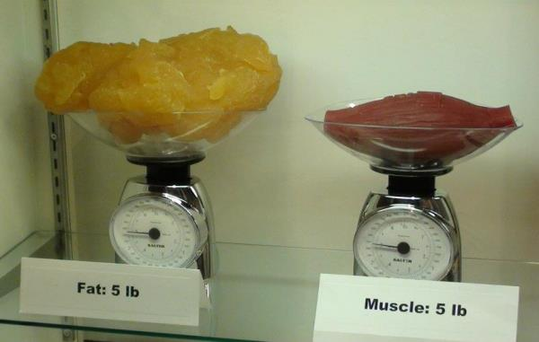 fat versus muscle